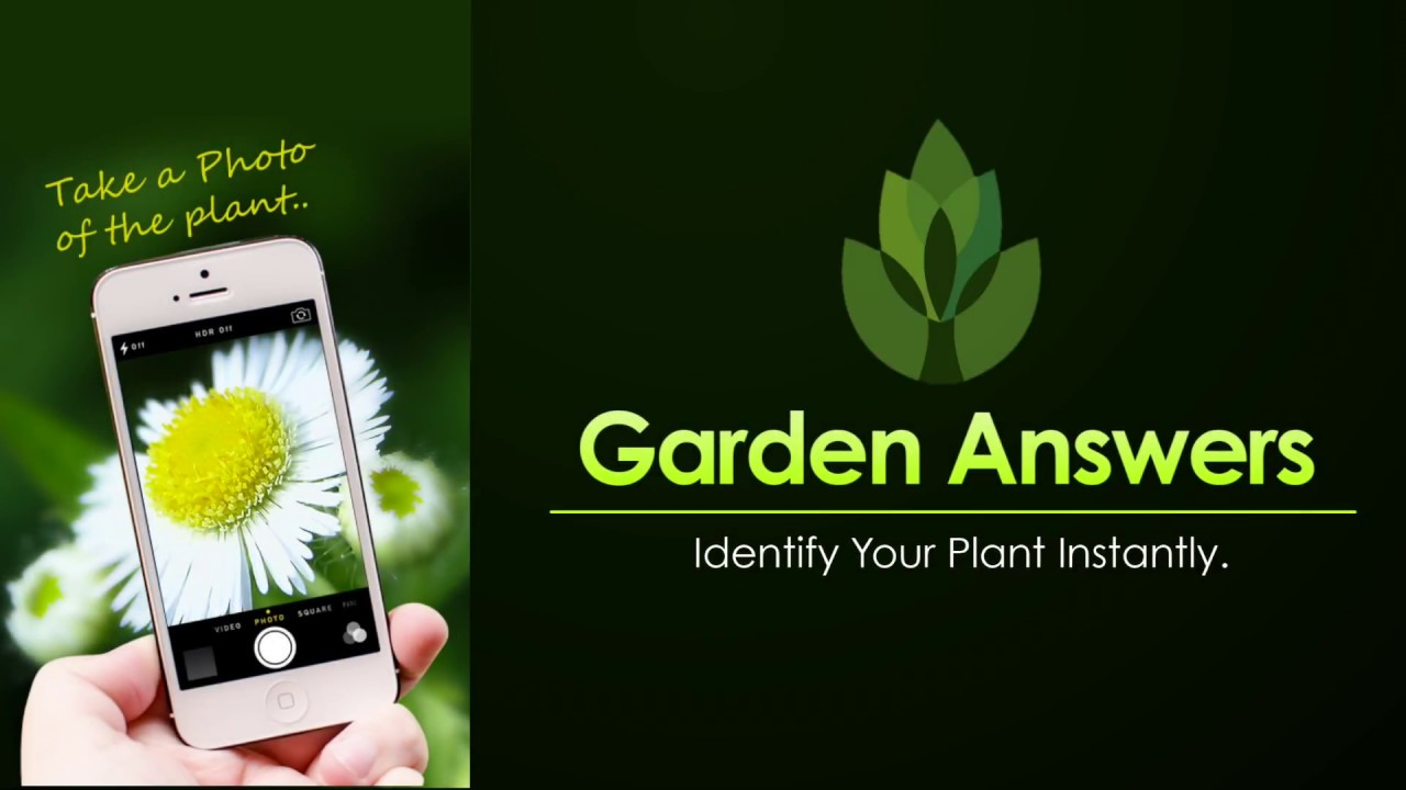 download this app take a picture of the plant and receive information instantly visit their website for more information httpwwwgardenanswers com - Garden Answers
