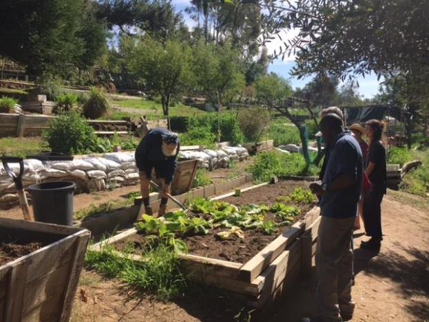 Lavender Hill Urban Farm Work Day