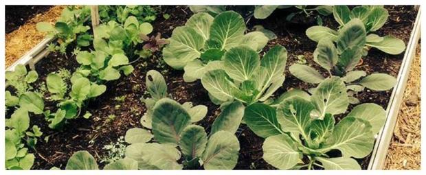 Urban Seed Saving Day