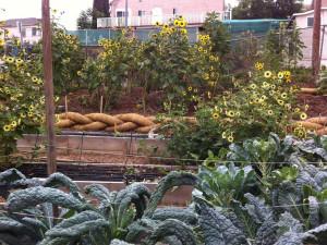 content_farmgarden
