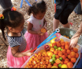 Get to Know NorthWest Pasadena Community Garden