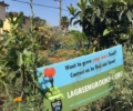 Meet LA Green Grounds Teaching Garden at Good Earth Community Garden